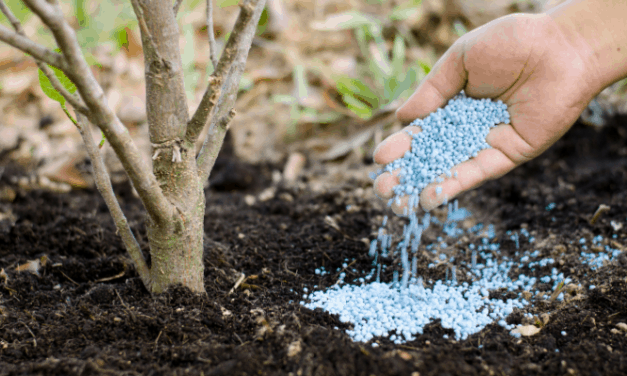 What is the difference Between Fertilizer and Compost?