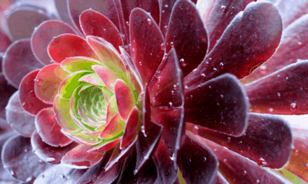 Are Succulents Evergreen? (Explained)
