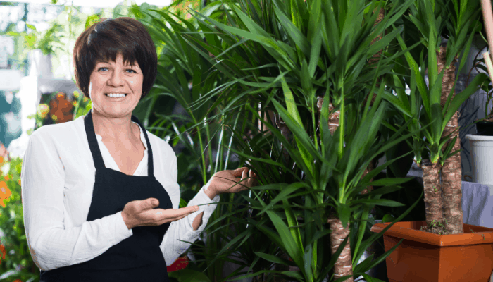 Why Is My Yucca Plant Drooping? (And How To Fix It ...