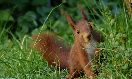 Will Squirrels Eat Pepper Plants? (And How To Stop Them)