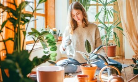 How To Properly Care For Your Rubber Plant (Detailed Guide)