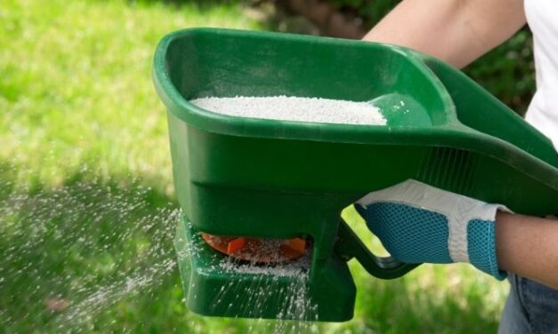 Will Grass Fertilizer Kill Weeds? (All You Need To Know)