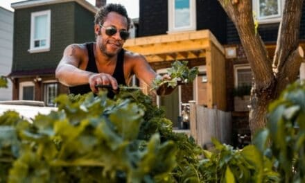 Can I Plant A Vegetable Garden Next To My House?