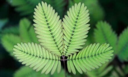 Why Is My Sensitive Plant Turning Yellow? (And How To Reverse It)