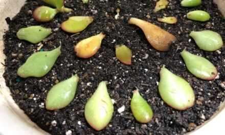 Why Won't My Succulent Grow Roots? (And What To Do)
