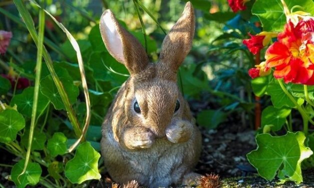 Will Rabbits Jump Into Raised Beds? (And How To Keep Them Out)