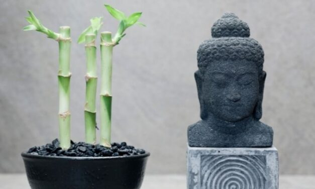 Can You Make A Lucky Bamboo Stalk Branch? (Explained)
