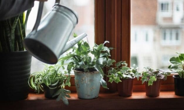 How To Water Your Houseplants In Winter (So They'll Thrive Come Spring)