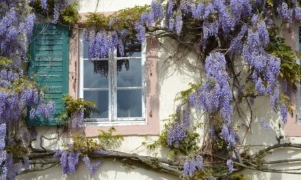 Will Wisteria Flower In Shade? (All You Need To Know)